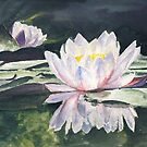 Waterlily&#x27;s by J-C Saint-P