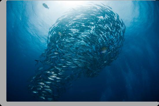 Lightbulb schooling fish by muzy