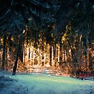 Glowing Winter Forest by Eva & Klaus WW