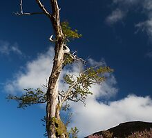 lone tree by loch muick by codaimages