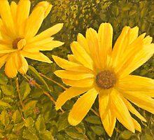 Marigolds. by stragglydan