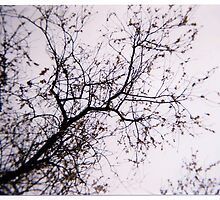 winter blossom by Catherine Hadler