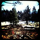 Ttv: Into The Woods by PeggySue67