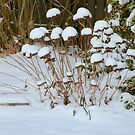 The Signs of Winter.... Mother Nature's crowns of Snow.... by Larry Llewellyn