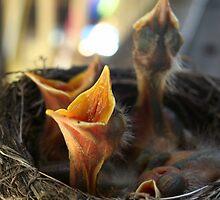 Four Birds by Amy Polkowski