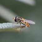 Buzzing By by Joy Watson