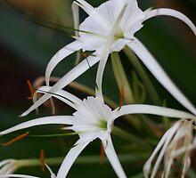 Flowers by elle2231