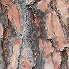 tree bark, by 11 year old Basti by Teresa Schultz