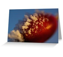Red Berry In A Golden Sunset Greeting Card