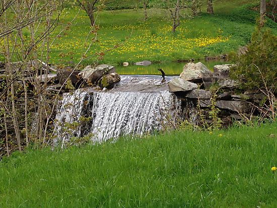 Dandelion Falls by May Lattanzio
