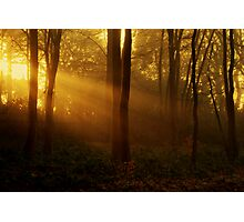 Autumn Rays Photographic Print