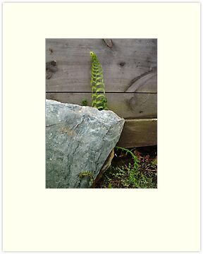 Fern and Rock by May Lattanzio