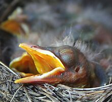 Tired and Hungry by Amy Polkowski