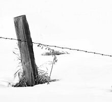 Winter Fenceline by Brian R. Ewing