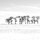 Winter Treeline by Brian R. Ewing