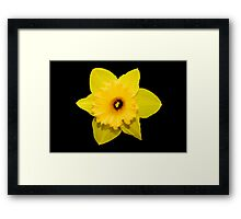 Black and Gold Framed Print