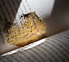 a leaf from the old book by Anita Schep