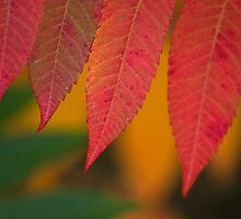 Depth of Autumnal Colour by Chris  Ridley