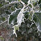 Frosted Holly by JoCr