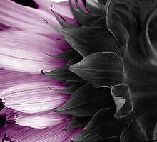 MAUVE SUNFLOWER by SIMON KEEPING
