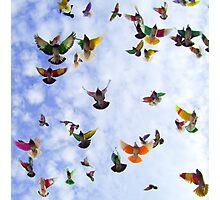 """Flight."" Photographic Print"