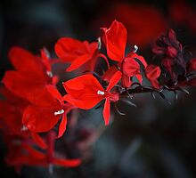RED AND BLACK FLOWERS by SIMON KEEPING