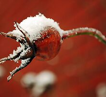 Frosty Rose Hip by Johanne Brunet