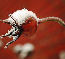 Frosty Rose Hip by Johanne Brunet