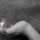 Tiny Tabby by PhotoFox