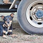 Truck Dog by Natalie Ord