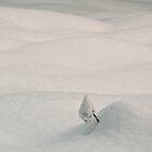 Snowy mini landscape by Istvan Hernadi