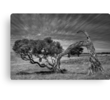 Tree lines Canvas Print