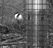 I See You: BLACK-CAP TITMOUSE aka Chickadee in Monochrome by Rebecca Bryson