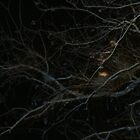my tree at night photo by sirfinepix27