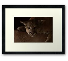 Magnificent Exciting Dangerous - The Mountain Lion Framed Print