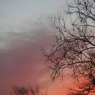 Sunset 4280 by Judi FitzPatrick