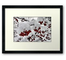 Red Berries with Snow Framed Print