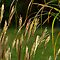 Grasses by Stephen Beattie
