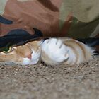 Angus in the Camo Tube by Andrew Trevor-Jones