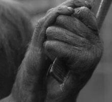 Getta Grip by Franco De Luca Calce