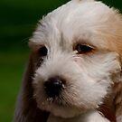 Puppy Love by Lolabud