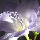 Freesia Flower by FelicityB