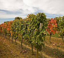 Autumnal Vines by Chris  Ridley