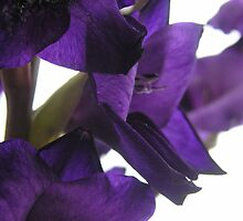 Dark purple, light touch  by nancynootje