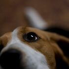 My doggy's puppy looks by casp3r