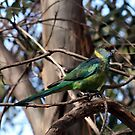 Mallee Ringneck by Suzanne Fatchen-Jaeschke