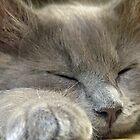 Cosmo sleeping by Hummingbyrd