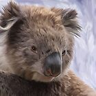 Koala by Cazzie Cathcart