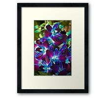 Beautiful coloured Orchids Framed Print