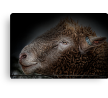 Barbed wire and a sheeps head. Canvas Print